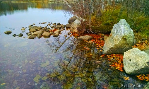 14. autumn leaves at lake auburn 11-6-14