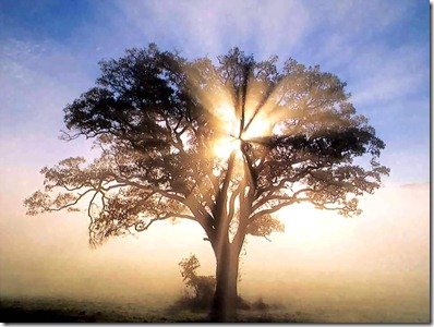 america_csg092_oak_tree_in_new_england_sunrise