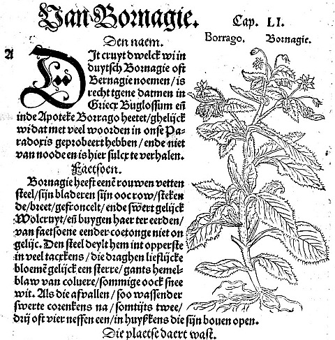 Страница из книги Fuchs, Leonhart