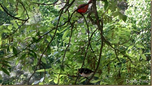 spring birds_016