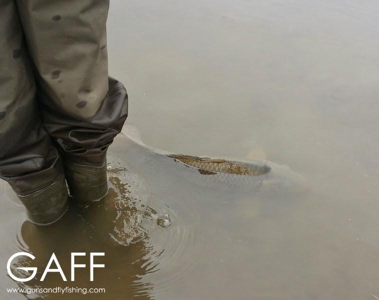 Fly Fishing for Carp (1).jpg