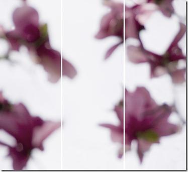 Magnolia,_No13