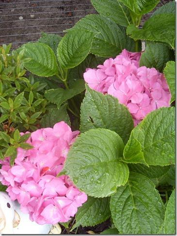 2012_07 Blumen im Garten (1)