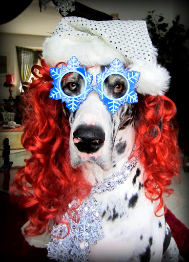 Kathryn D.'s Great Dane, Sugar Joy, is feeling the holiday spirit!