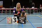 20130510-Bullmastiff-Worldcup-0182.jpg