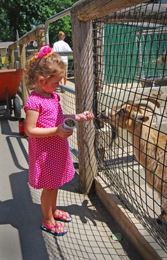 rylee feeding goats 2 zoo