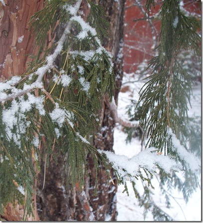 snow, 2012 008