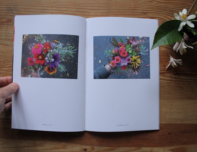 Jaime Rugh - Backyard Flowers Book 5