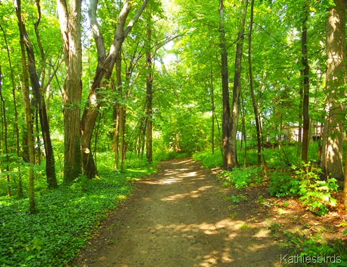 8. woodland path-kab