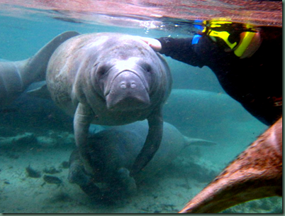 River Ventures Manatee Tours Photo Gallery