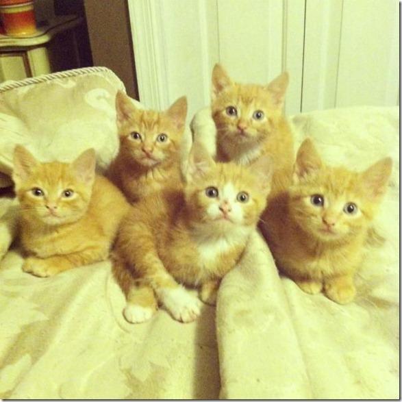 cute-funny-animals-8