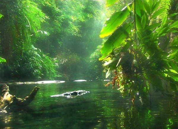 6- Floresta Amazónica