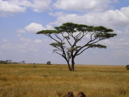 Safari Tanzania: Parcul National Serengeti.