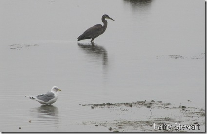 Gull and Heron