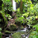 Lush, Tropical Rainforest - Roseau, Dominica