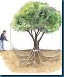 fineliving tree fertilzier