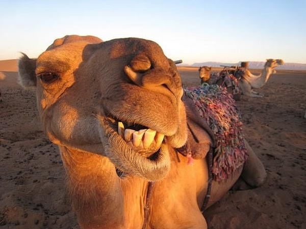 Geico Happy Hump Day Images Psssst+hump+day+is+coming.jpg