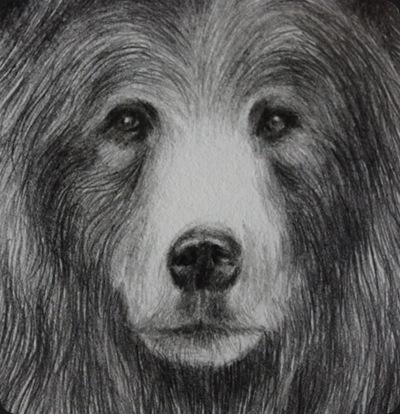 bear_1