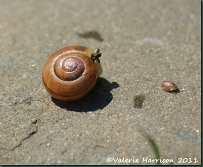 21-snail-shell