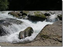 lewis river falls 37