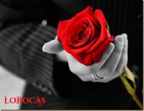 rosa-LoBocAs-5011