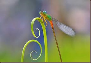 Amazing Pictures of Animals, photo Nature, exotic, funny ,incredibel Zoo, Dragonfly, Insecta, Alex (10)
