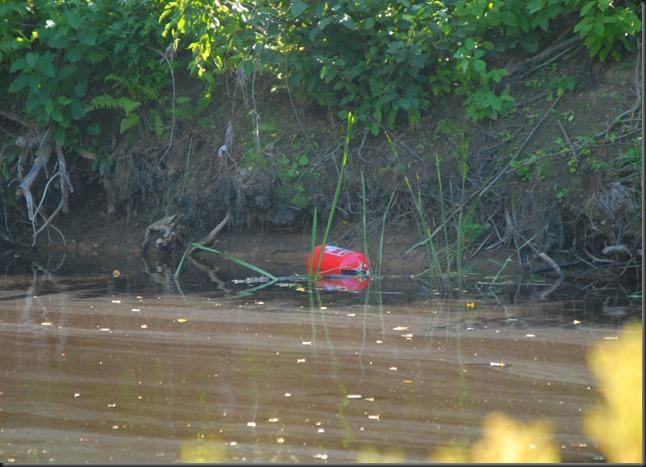 kärpäset jauhesamutin joessa 041