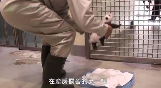 Bebê Panda Gigante 02