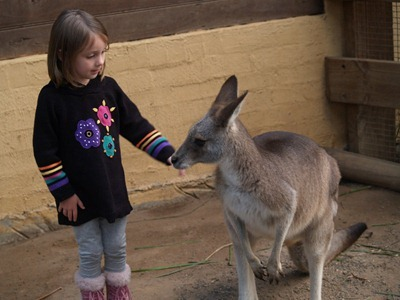 Anna petting wallaby