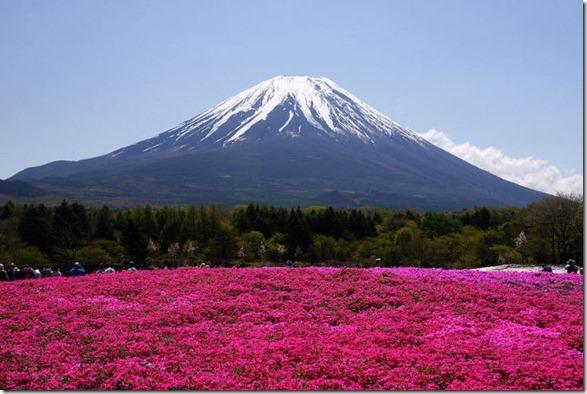 pink-park-japan-8