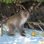 Tailand-Phi-Phi (20).jpg