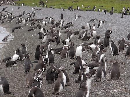 Tara de Foc: Pinguini