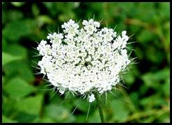 9c - wildflowers