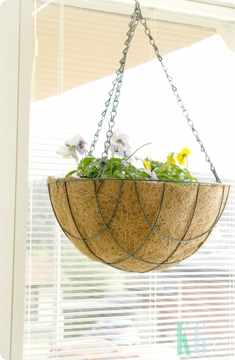 hanging kitchen planters