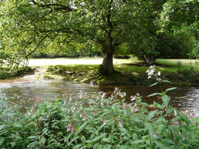 spirituele-reis-dartmoor-engeland-4.JPG
