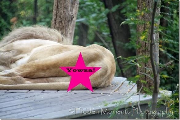 Lion Yowza