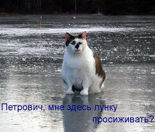 kotomatritsa_rJ
