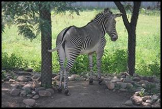 Zoo5 055
