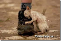 HelpMe!