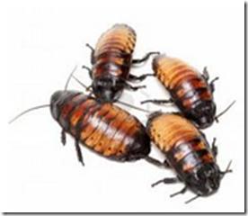 Eliminar el problema con un ahuyentador de cucarachas