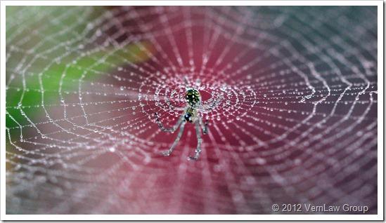SpiderWeb_1_IMG_9298
