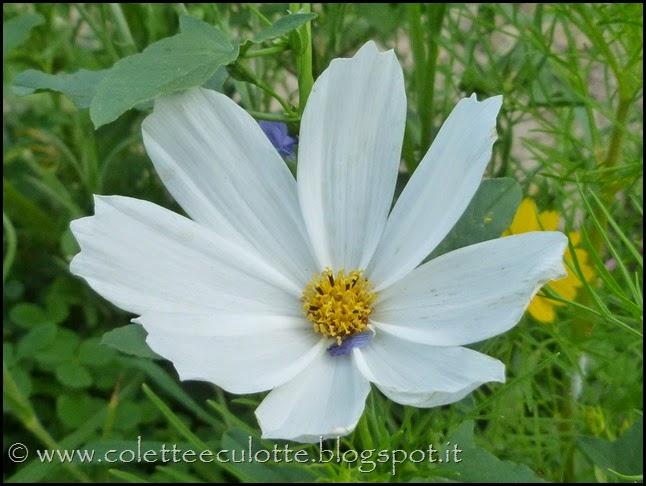 OrtoLà - La fioritura (2)