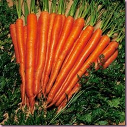 Carrot Sugarsnax 54 F1 Hybrid