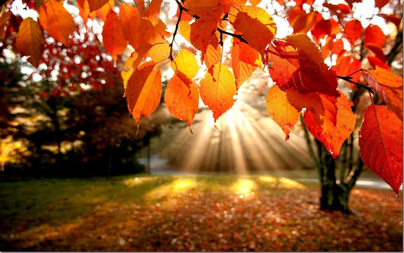 Sun and Fall Leaves