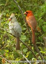 0513 cardinal couple (5)
