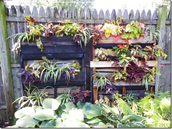 Shawna Coronado's pallet garden