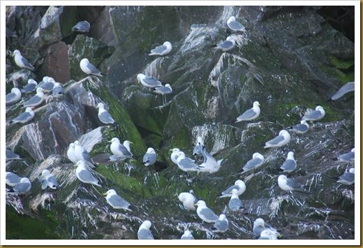 Chirpoy Birds