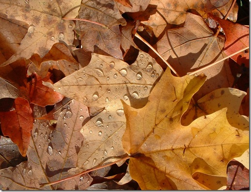 autumn_leaves.2