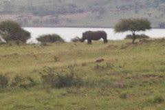 Drakensburg Rhino