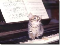 gato pianista blogdeimagenes (18)